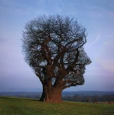 mindful tree